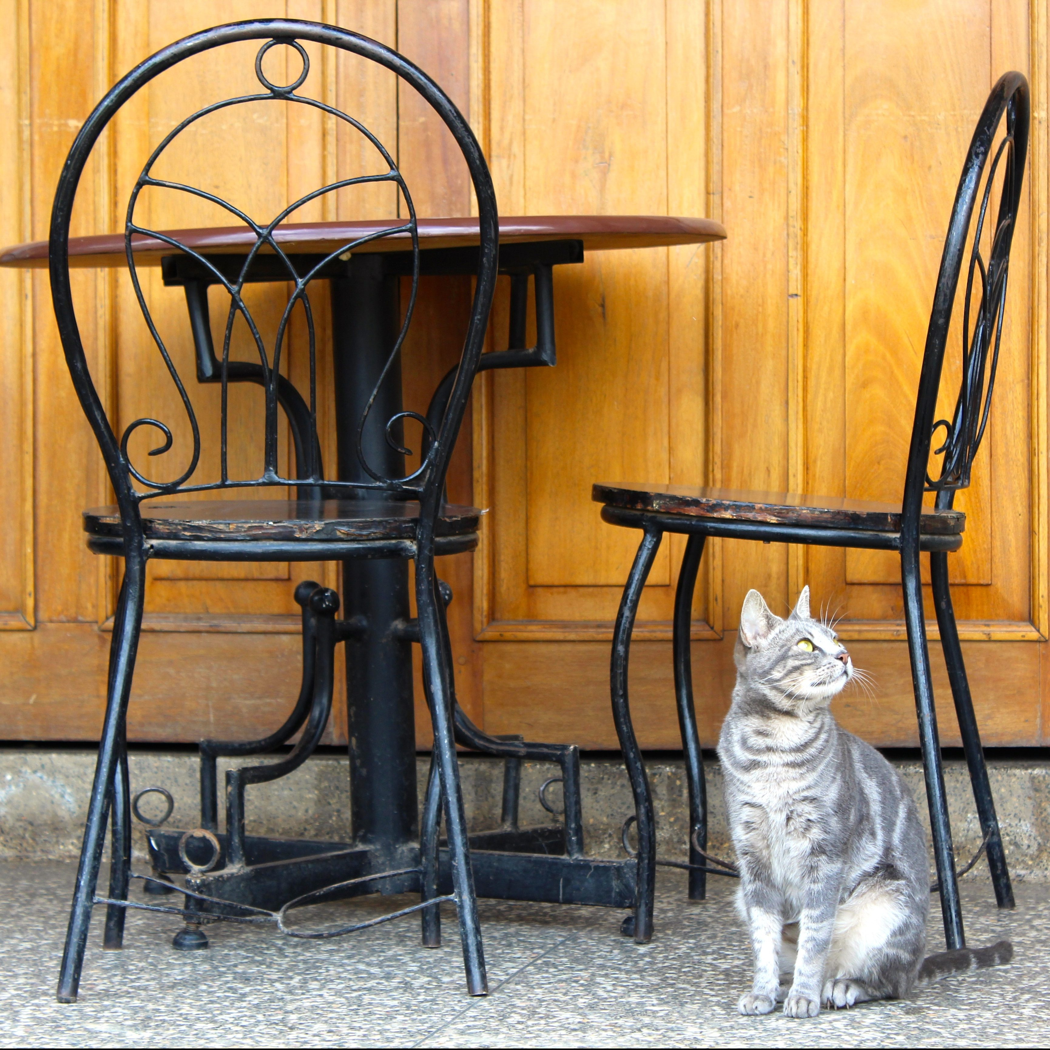 cat sitting under a cafe table