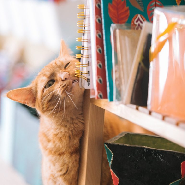 cat rubbing face against bookshelf